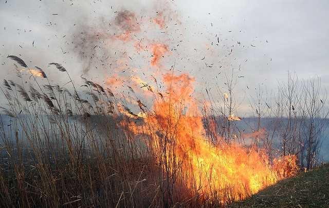 На Прикарпатті знову масово горить суха трава та сміття