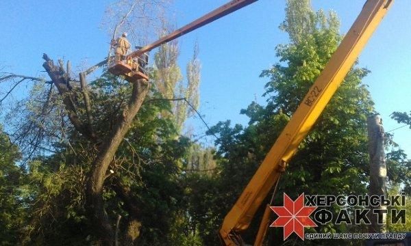В Херсоне наложен временный мораторий на вырубку деревьев