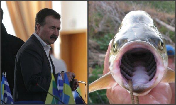 распоряжение о запрете ловли рыбы