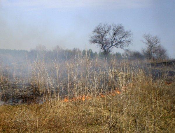 У Херсонській області сталось 2 пожежі на відкритих територіях