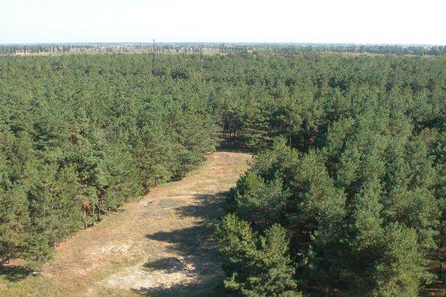 Лісничі Херсонщини вирушили протестувати в Київ
