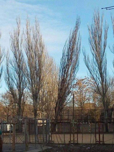В центре Херсона сгнившее дерево упало на футбольное поле