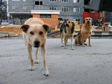 У Новій Каховці зграї бродячих собак атакують людей