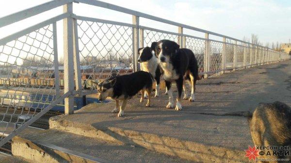 Херсонские депутаты требуют спасти людей от бродячих собак