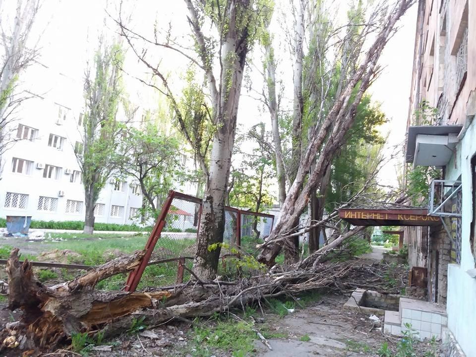 На жилпоселке аварийные деревья могут убить прохожих