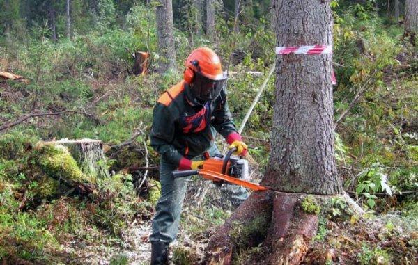 Жители Херсонщины смогут проверять лесорубов