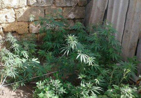 У Херсонській області поліцейські вилучили наркотики у місцевого жителя
