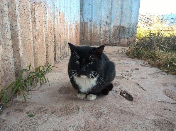 Житель Херсонщины заплатит штраф за выстрел в кота
