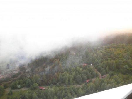 Расследование масштабного лесного пожара на Херсонщине пока затягивается
