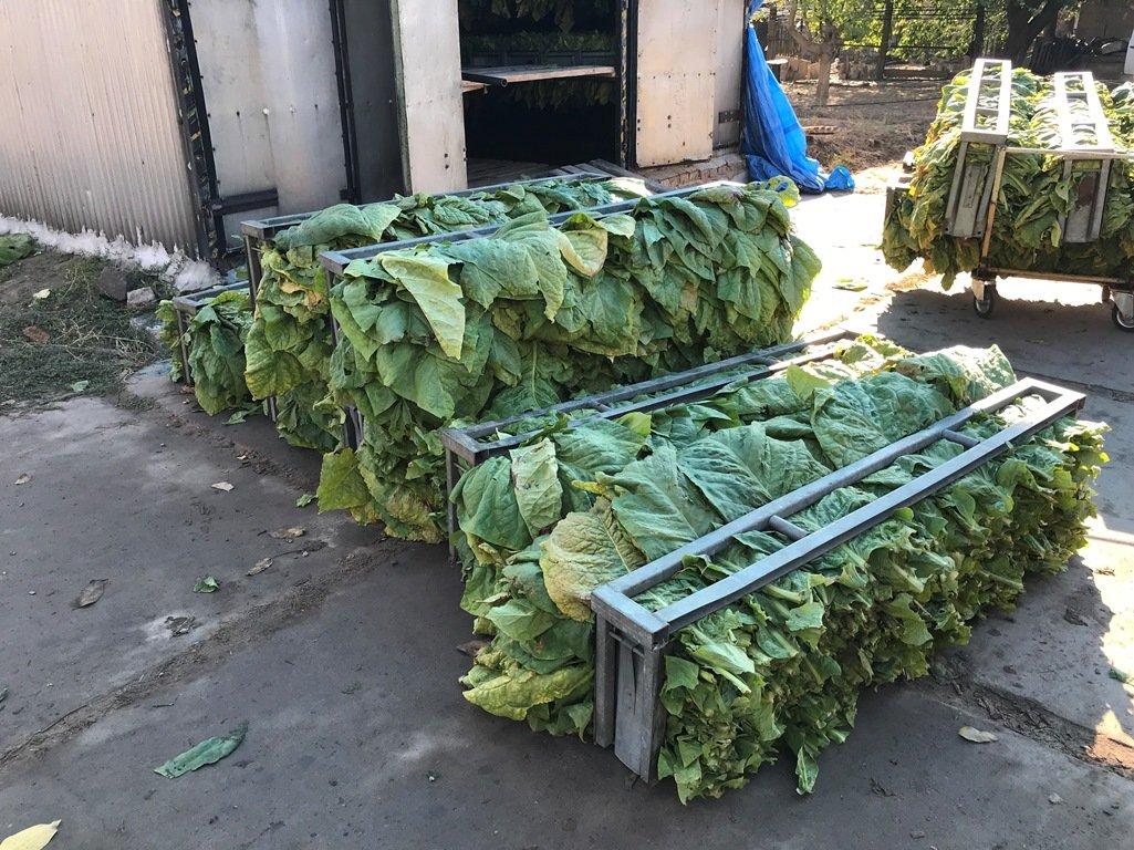 На Херсонщині виявили підпільного «тютюнового магната»