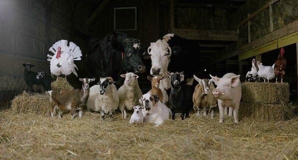 В Херсонской области сокращается количество сельскохозяйственных животных