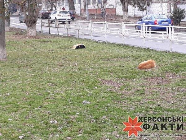 Фотофакт. Херсонских студентов караулят бродячие собаки