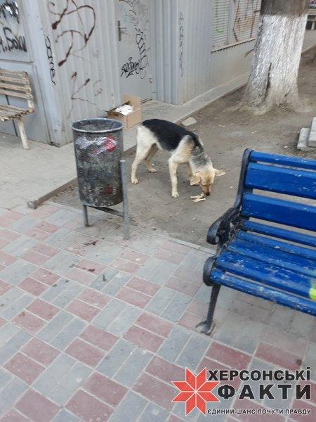 Фотофакт. Херсонцы помогают бродячим собакам, но вредят людям