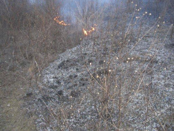 Служба порятунку Херсонщини закликає громадян дотримуватися правил пожежної безпеки в екосистемах
