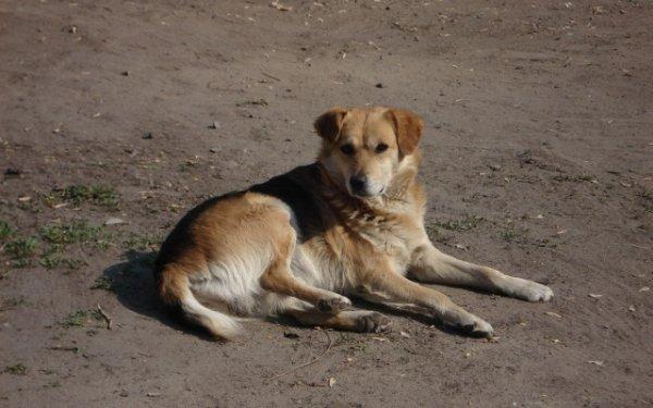 Стерилизовать новокаховских собак будут аж в Харькове