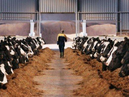 ГСЧС определит, какие заболевания сельскохозяйственных животных относить к ЧС