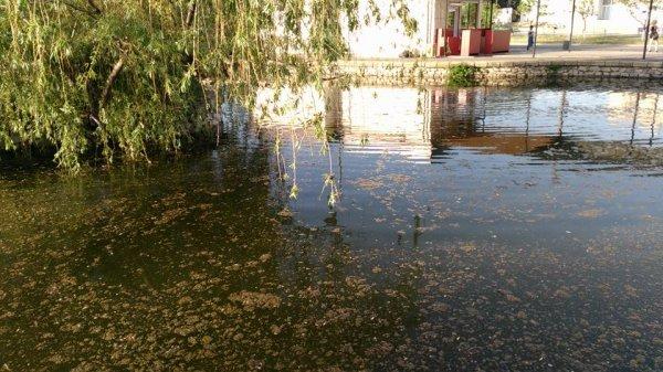 """""""Плесень, грибок, жабы квакают"""", - новокаховчане недовольны состоянием фонтана"""