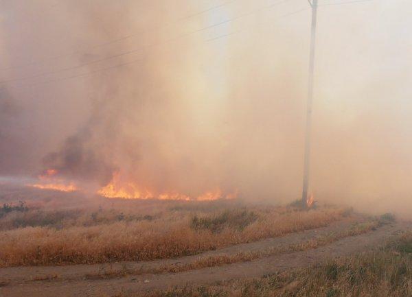 Пожежі в екосистемах: 25 разів горіла суха трава