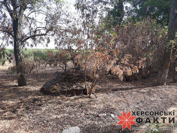 Фотофакт. Херсонщина переживает ежегодное уничтожение природы
