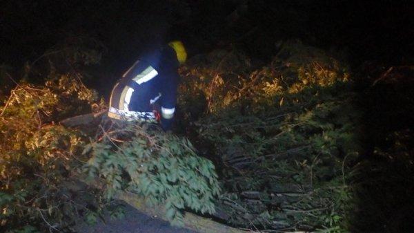 Каховські рятувальники прибрали дерево, що перекрило дорожній рух