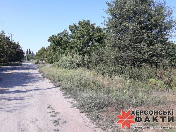 На Херсонщине курортное село встречает аллергиков огромной амброзией