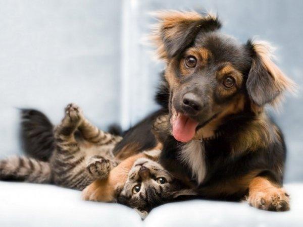 Нарушение правил содержания собак приводит жителей Херсонщины в суд