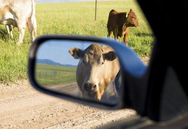 """История """"разборок"""" пастуха и водителя автобуса на Херсонщине имела продолжение"""