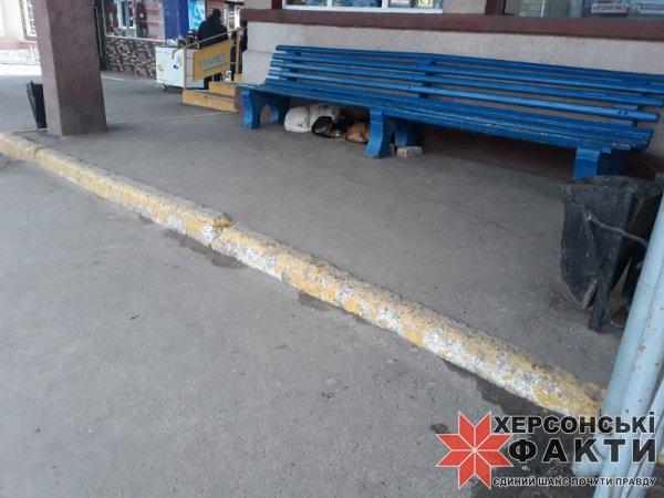 Фотофакт. Центр города на Херсонщине оккупировали бродячие собаки