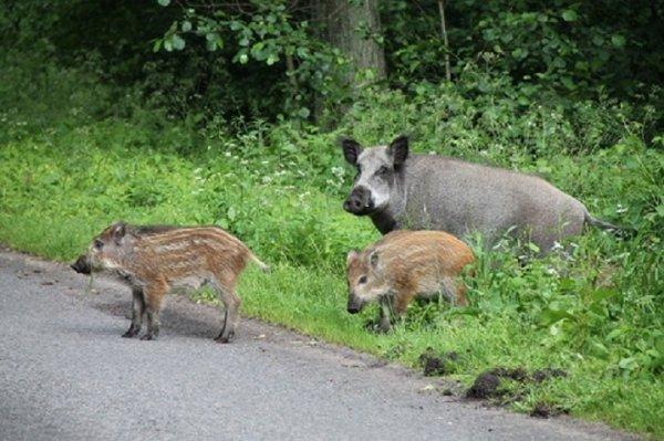 Стало известно количество охотничьих животных на Херсонщине