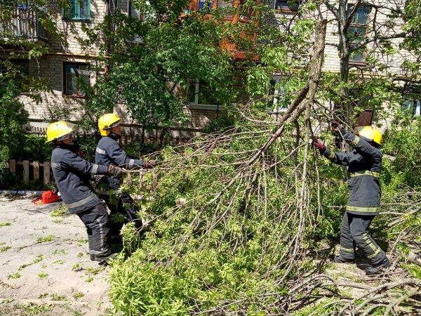 Каховські рятувальники прибрали дерево, що впало на дорогу