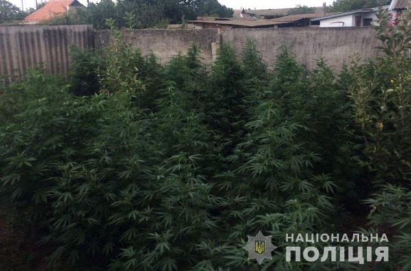 За добу у Бериславському районі поліцейські виявили посіви наркорослин на понад 500 тисяч гривень