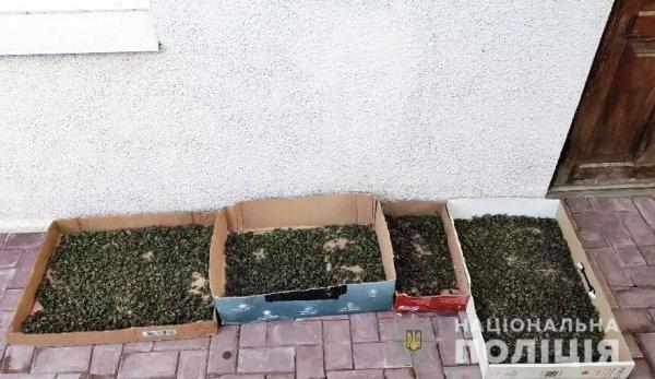 У Херсоні поліцейські вилучили 18 кілограмів марихуани вартістю 800 тисяч гривень