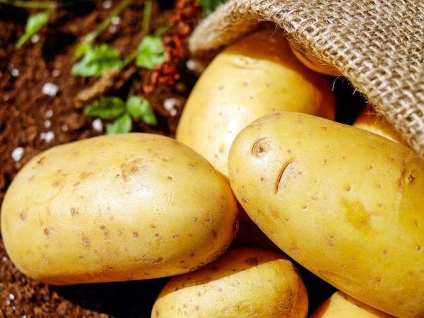 Картофель и яблоки будут лидерами по подорожанию до весны-2020 – эксперт