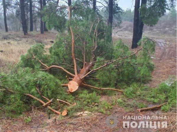 Працівники Голопристанського відділення поліції задокументували два факти незаконної порубки лісу