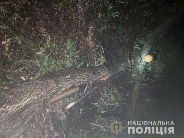 За минулу добу поліція Херсонщини відкрила три кримінальні провадження за незаконну порубку дерев