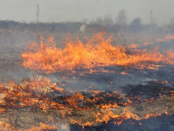 На Херсонщині на території лісництва ліквідовано пожежу