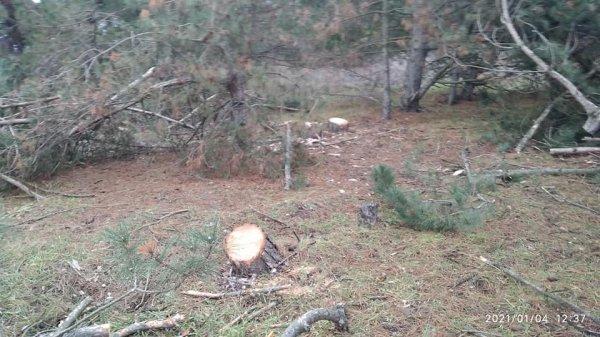 На Херсонщине массово уничтожают леса