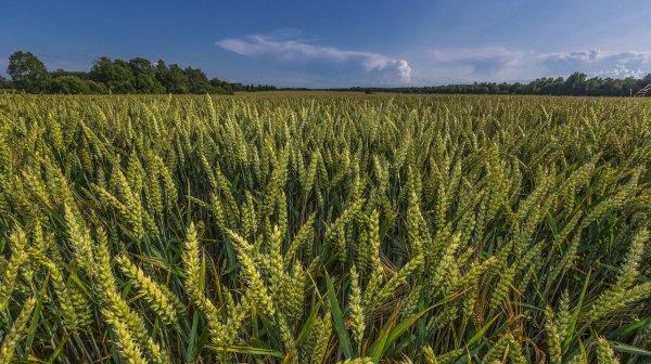 У Херсонської області – найкращі в Україні показники зі збирання врожаю